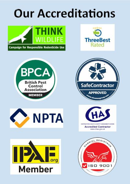 An image showing our Accreditations from Think Wildlife, Three Best Rated, British Pest Control Association, Safe Contractor Approved, NPTA, CHAS and IPAF.