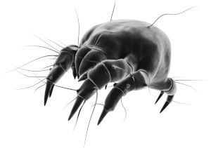 We provide pest control services for bed bugs and mites in the North West