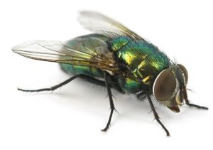 We provide specialist pest control services for fly problems in Liverpool