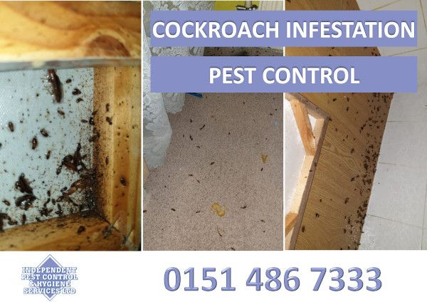 An image showing a cockroach infestation that we treated as part of our pest control services