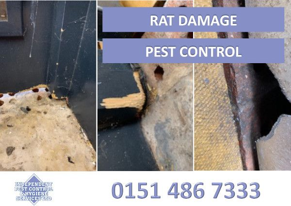 An image showing damage by rats as part of our pest control services.