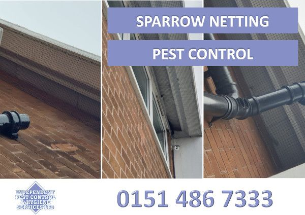 An image showing Sparrow Netting as part of our pest control services.