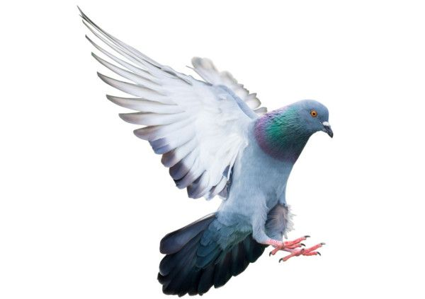 We provide specialist pest control services for bird and pigeon problems in liverpool